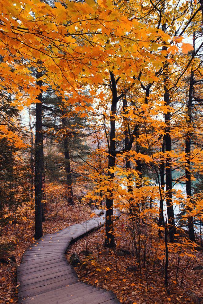 осень вертикальные картинки сентябрь отличительная
