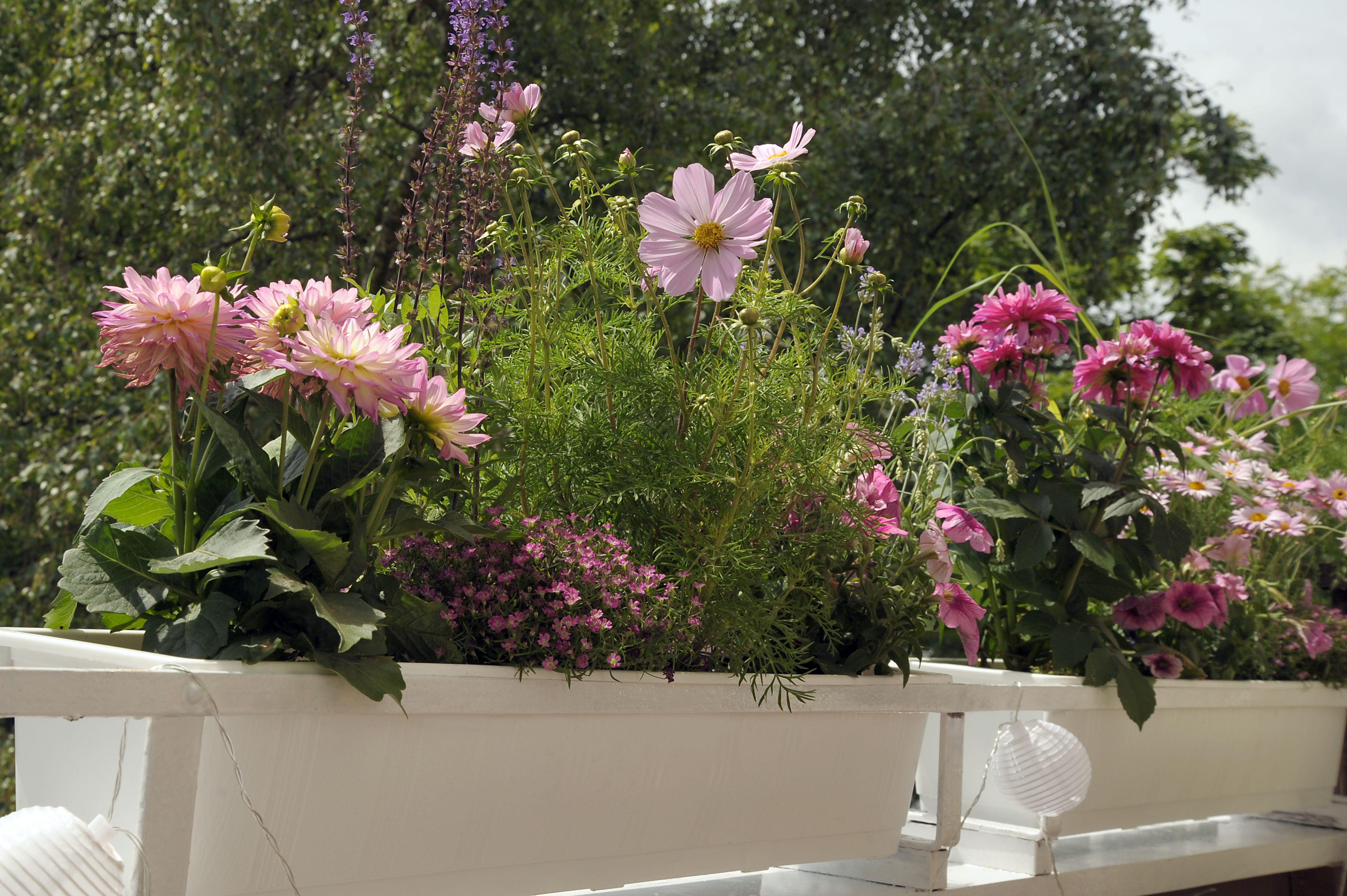 blumenk sten romantisch gestalten balkonpflanzen pinterest balkon pflanzen pflanzen und. Black Bedroom Furniture Sets. Home Design Ideas