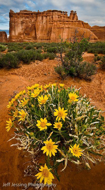 desert highlight