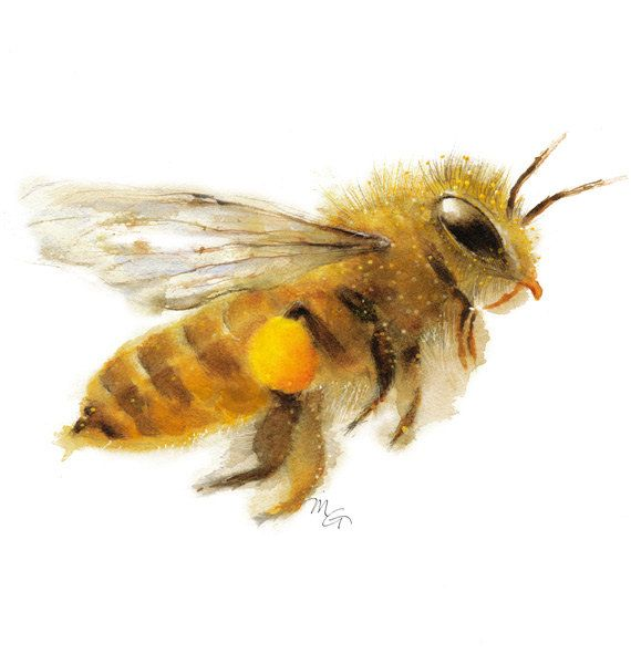 Honey bee watercolor painting art print nature by for Bienen dekoration