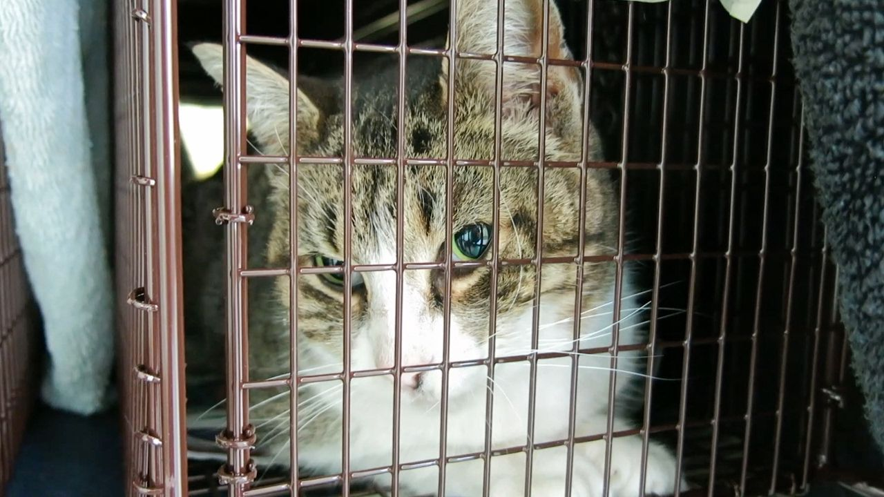 How to Trap a Feral Cat for TNR Feral cats, Cat traps, Cats