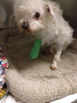 Severely neglected dog dumped outside of shelter