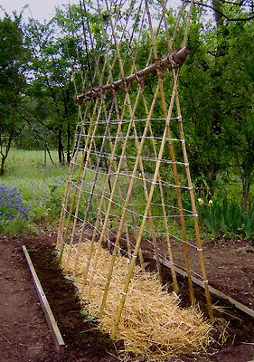 How To Build A Tee Pee Trellis With Images Bamboo Garden