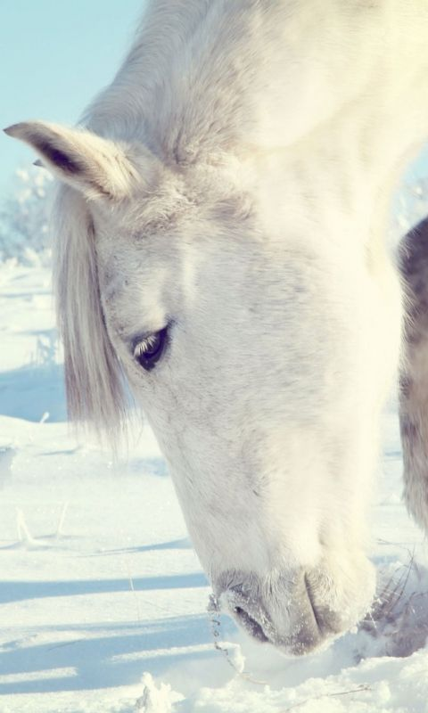 480x800 Wallpaper Horse Snow Shrubs Winter Head Horses Winter Horse Horse Wallpaper