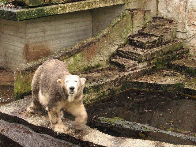 Pin On Poor Polar Bear