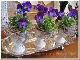 Lovely spring pansies in vintage egg cups