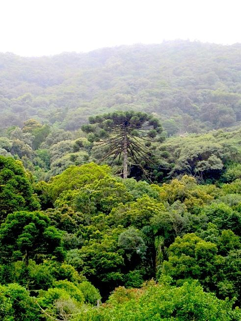 The fi rst biosphere reserve in india is the nilgiri biosphere reserve that is a part of tamil nadu,. Pin On Travel Unesco World Heritage Sites