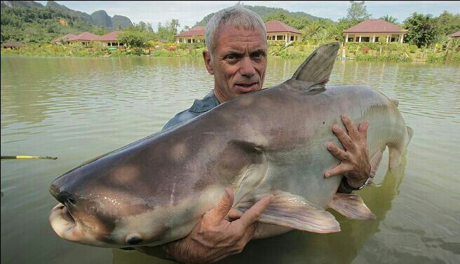 mekong giant catfish jeremy wade river monsters river monsters