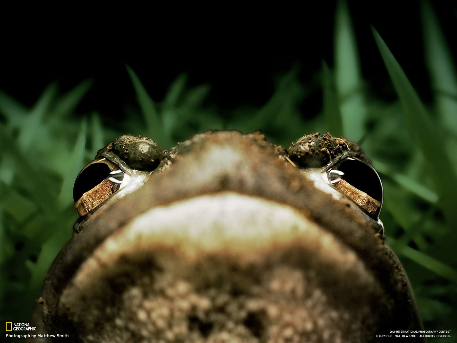 national geographic | National Geographic Wallpaper - Photograph by Matthew Smith