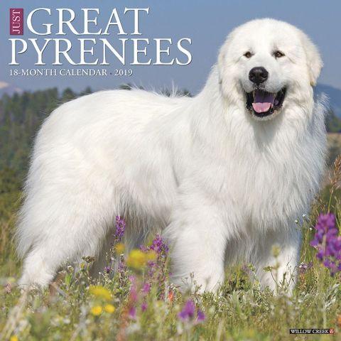 Great Pyrenees 2019 Calendar The Great Pyrenees breed traces its