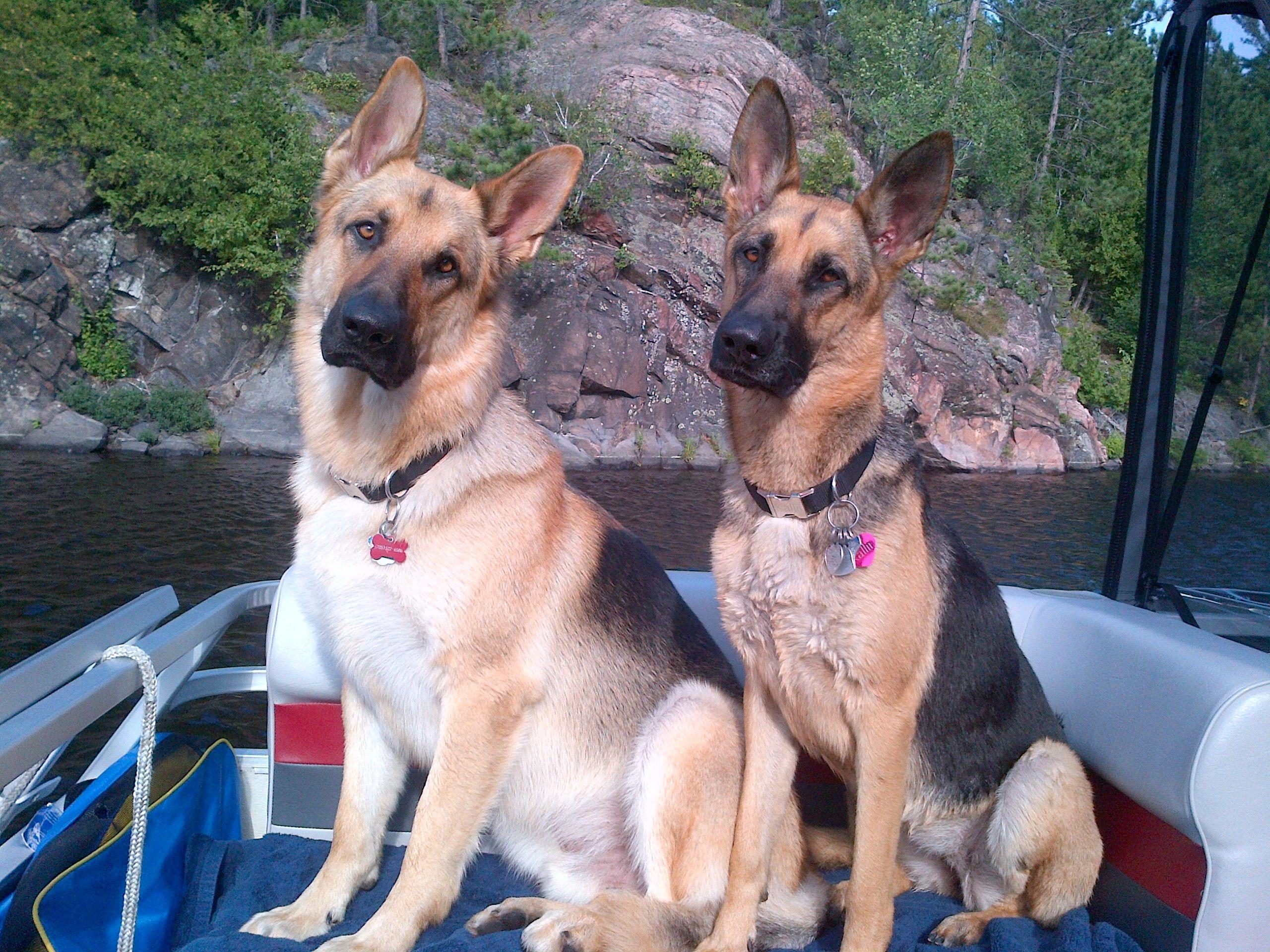 Gsds Kallii Jaxon Pontoon Pups With Images German Shepherd German Shepherd Dogs Pup