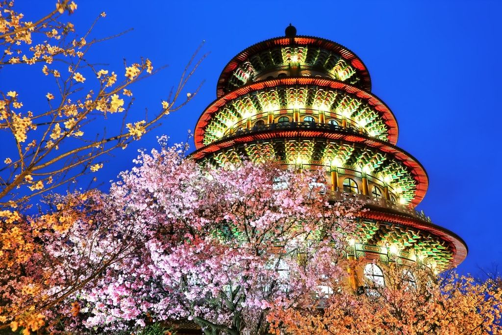 The Best Places To See Cherry Blossoms In Taiwan Places To See The Good Place Cherry Blossom