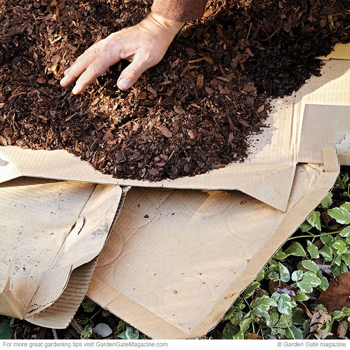 Smothering technique | Gardening To Do ASAP | Garden ...