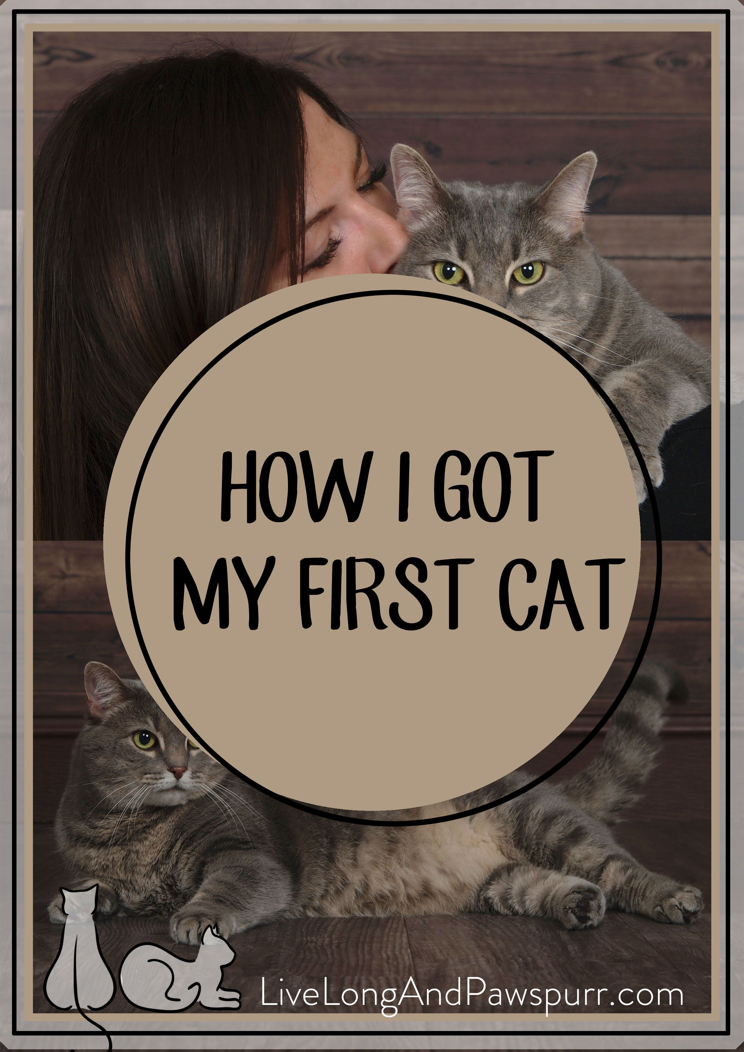 How I Found My First Cat Cat Training Cats Cat Training Scratching
