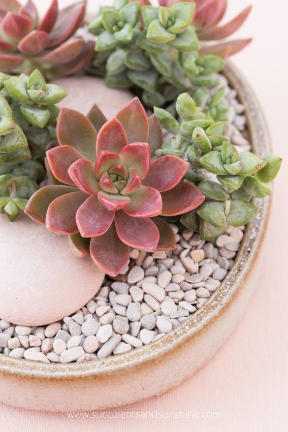 Top Dressing Decorative Rocks For Your Succulents Succulent Rock Garden Succulents Rock Decor