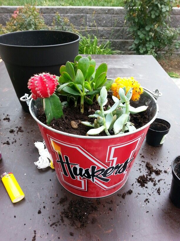 My first succulent bucket! Walmart sells the bucket