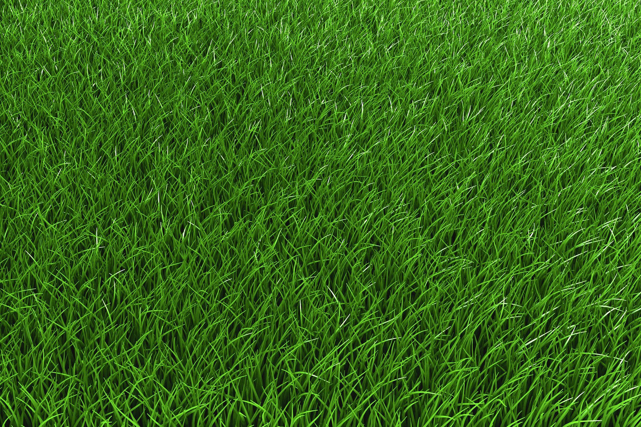 Kenicott Creeping red fescue is the perfect perennial