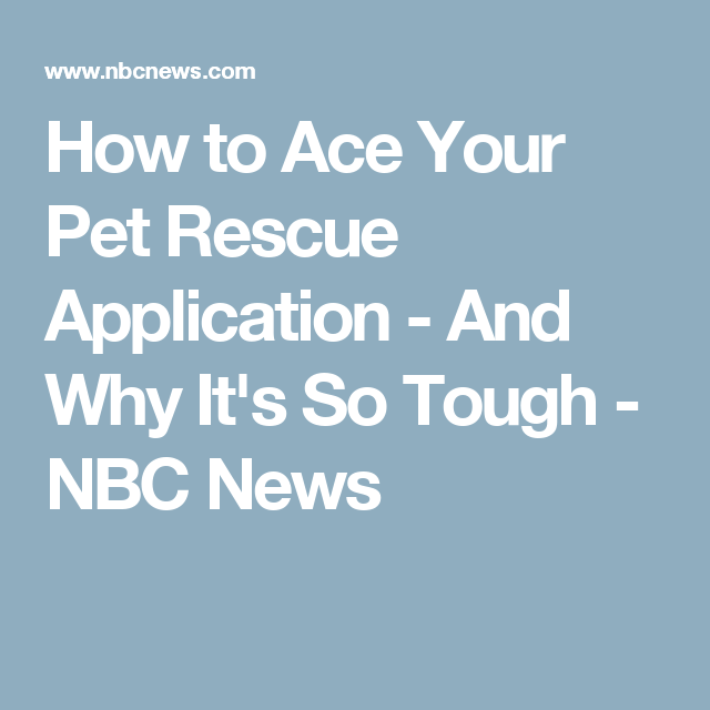 How to Ace Your Pet Rescue Application - And Why It's So Tough - NBC News