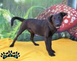 Elvis Is An Adoptable Labrador Retriever Dog In Fort Lauderdale Fl Meet Elvis A Sweet Boy Just In From The Cayman I Dog Adoption Labrador Retriever Dog Dogs