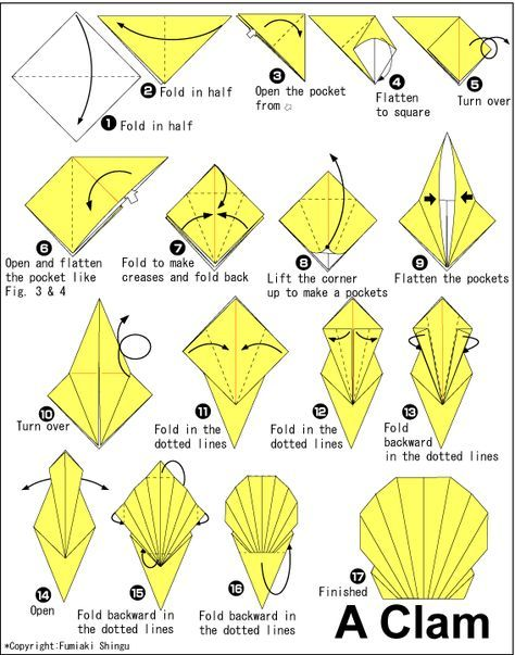 Origami Clam For Kids Pinterest Clams Diagram And Origami