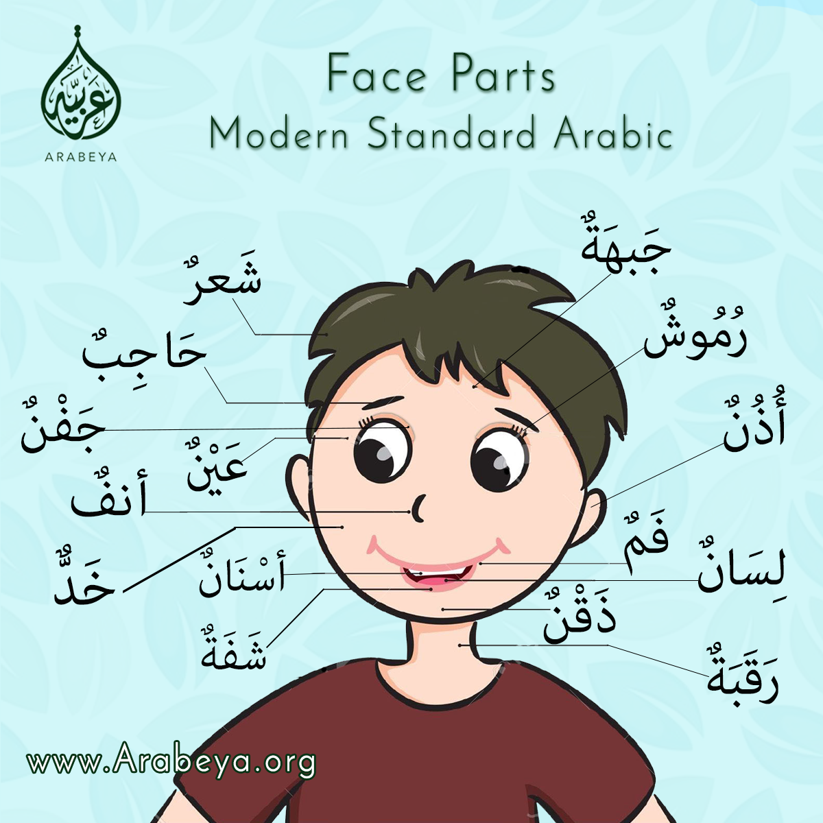 Learn Face Parts In Arabic Learnarabicactivities