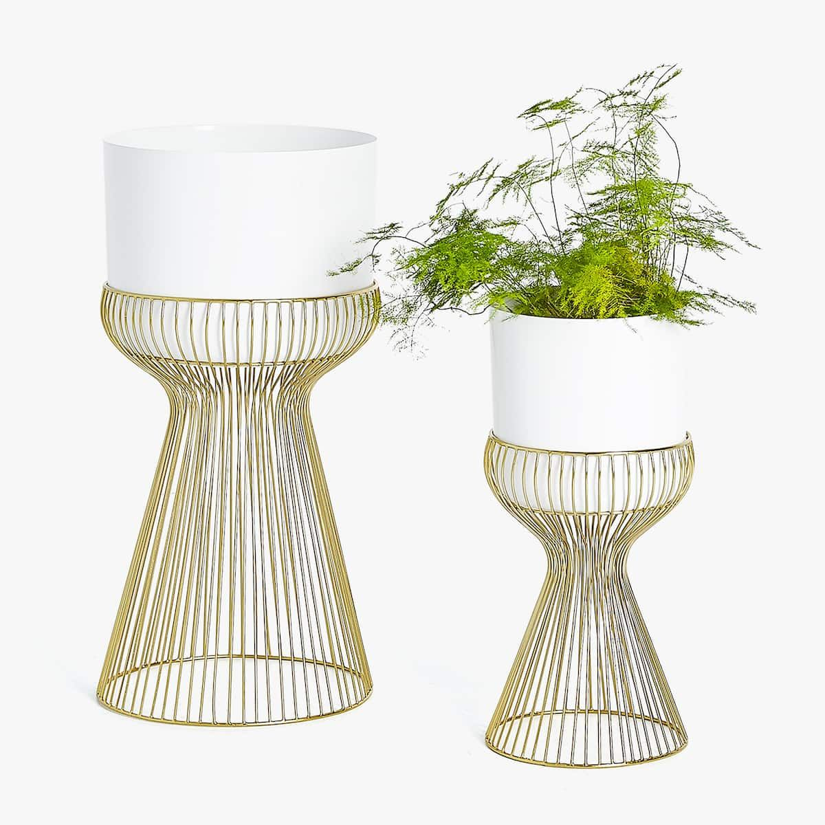 Image 6 of the product GOLDEN RIM PLANTER WITH WHITE POT