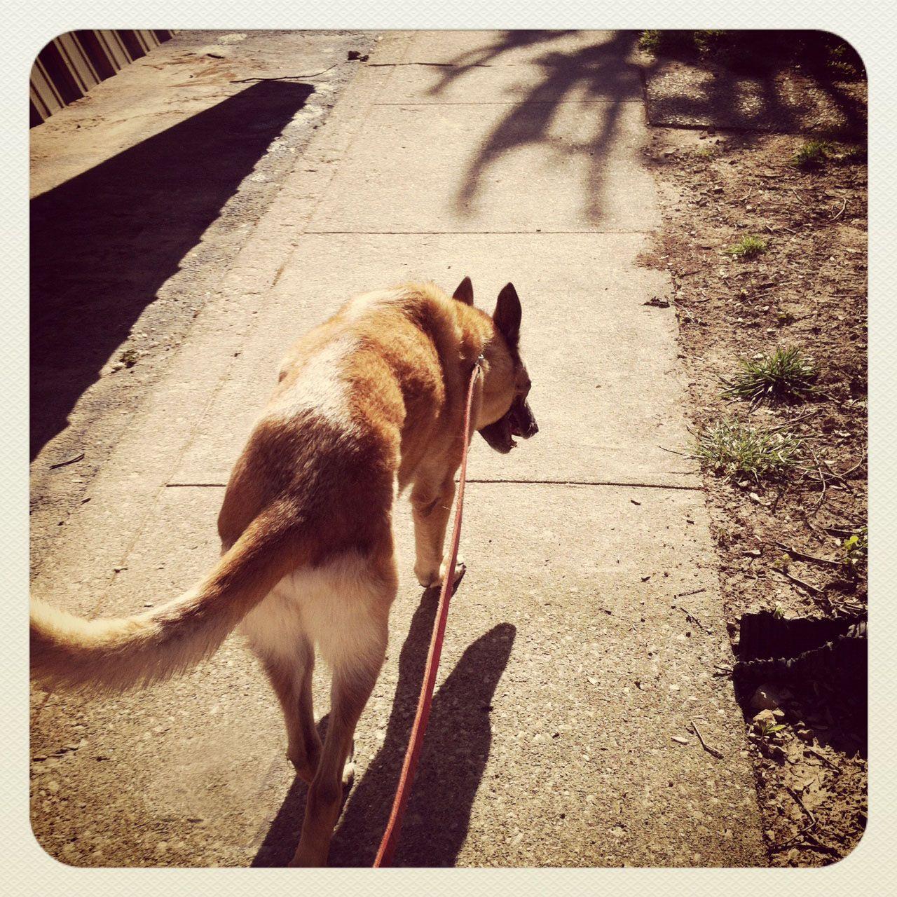 concrete desert Dogs, Kangaroo