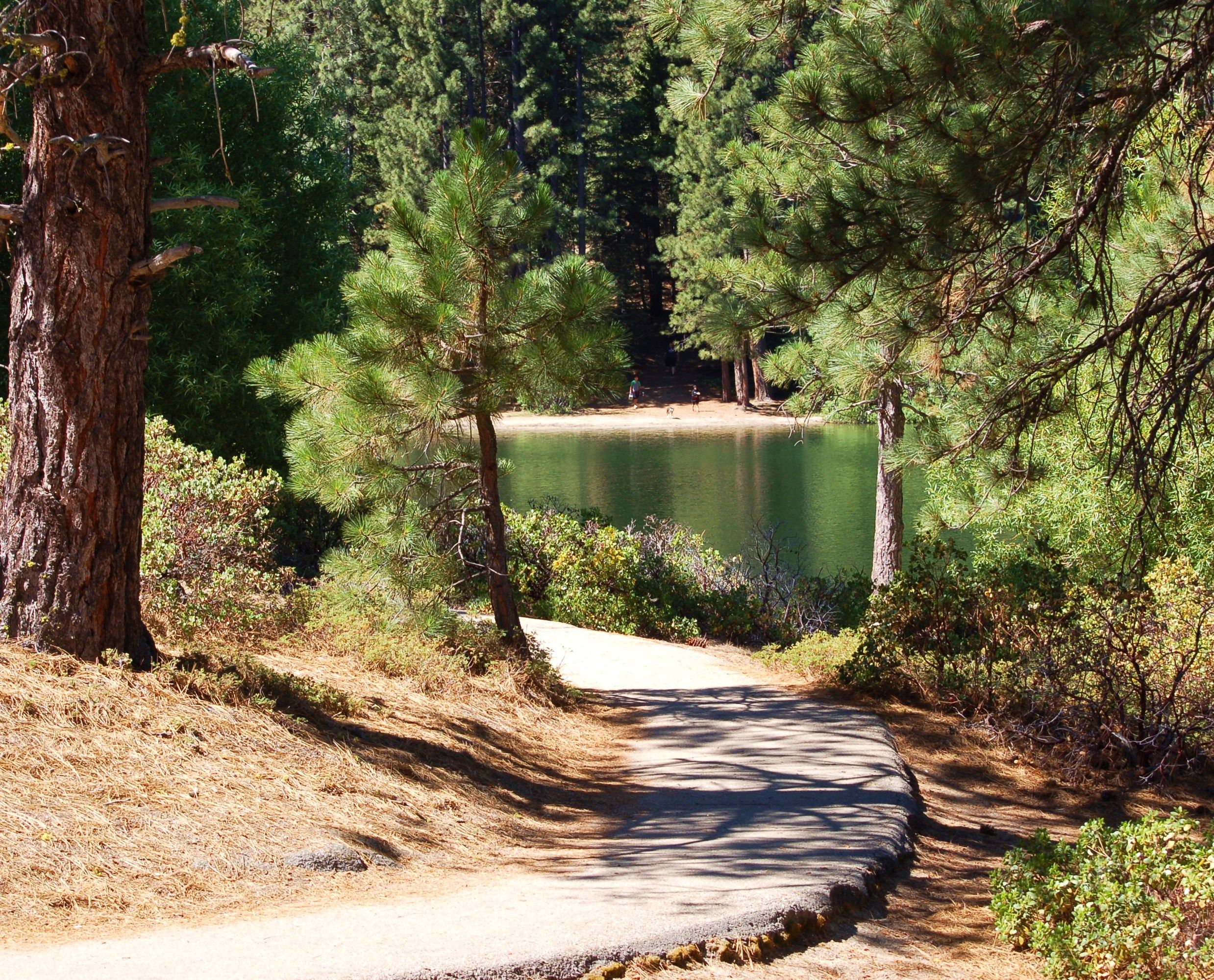 gifts front camp lodging guest supplies with forest high sequoia porch kings canyon national parks bp in cabins bearpaw sierra and
