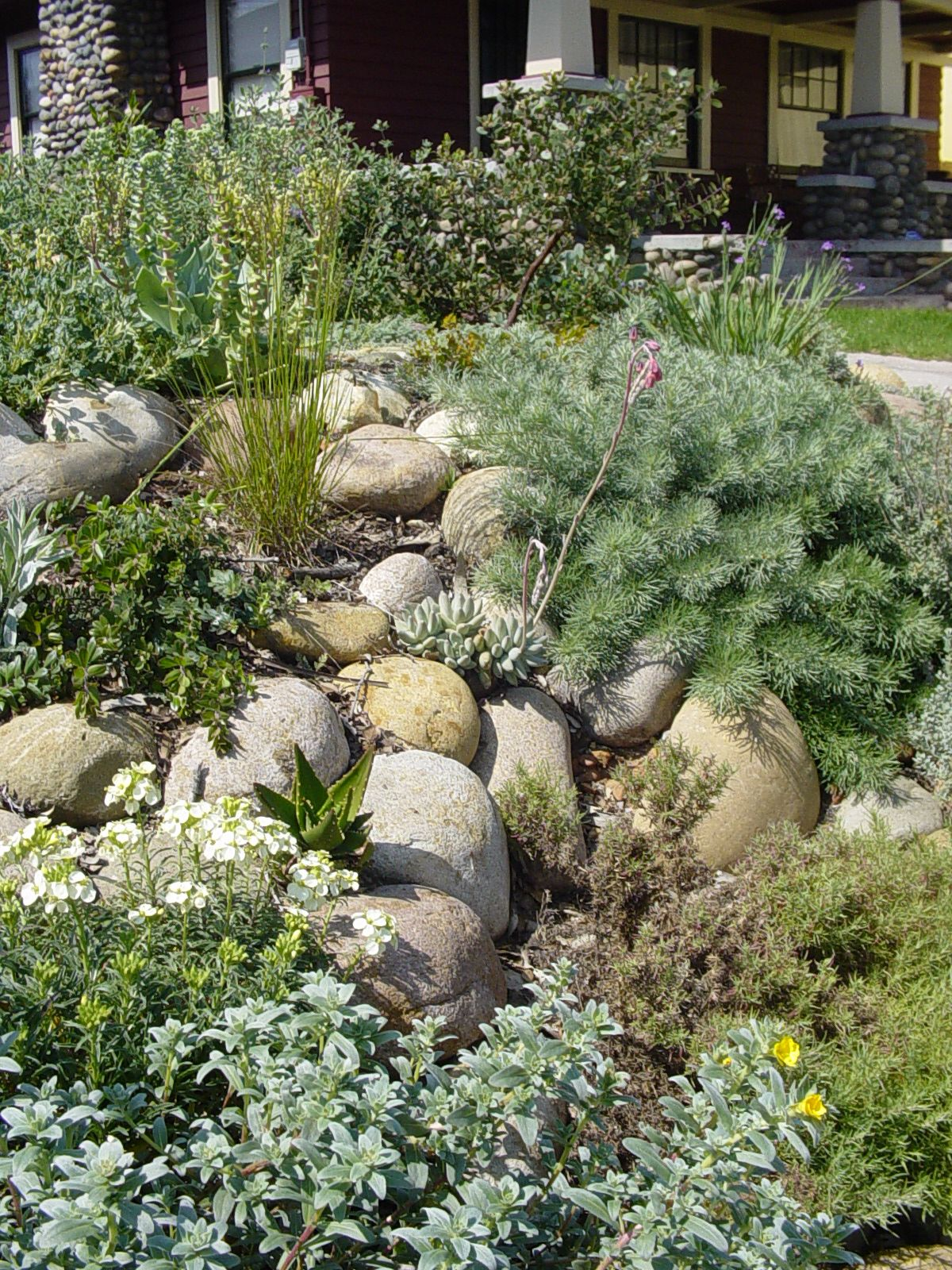 California native garden among boulders california for Southern california native plants