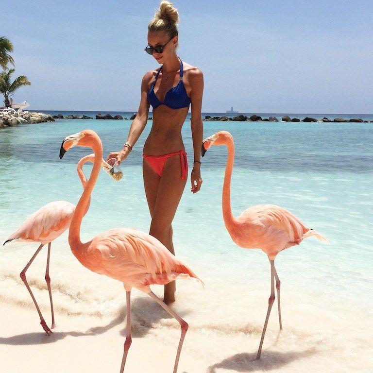 Flamingo Beach Oranjestad Aruba How