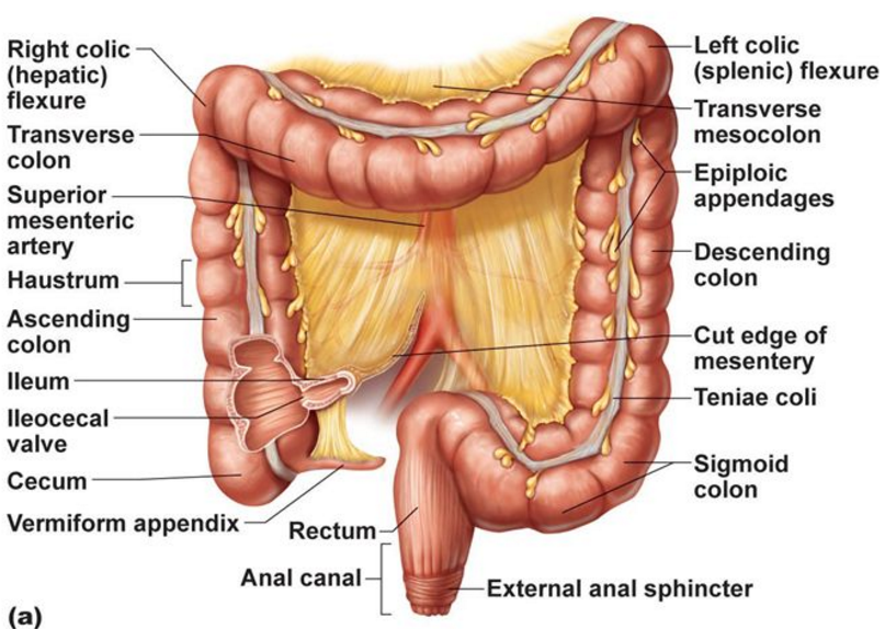 Colon Anatomy Surgery Pinterest