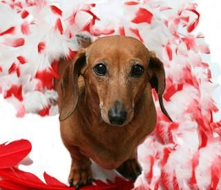 #Valentine's Day #Chocolate #Deadly for #Dogs