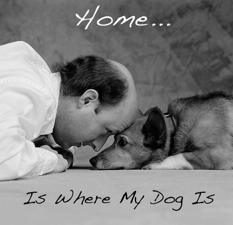 Картинки с надписью купи собаку