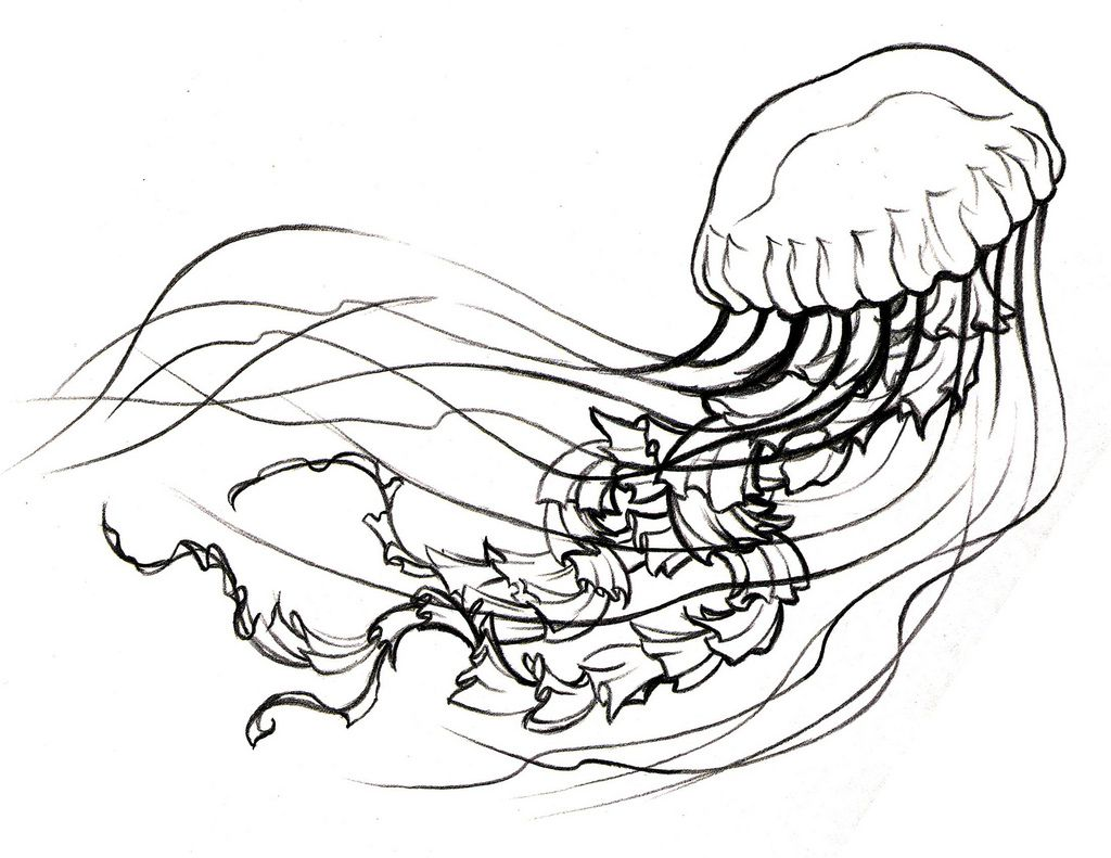 Line Drawing Jellyfish : Image gallery jellyfish line drawing