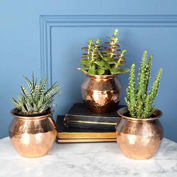 Unusual Indoor Plant Pots Uk