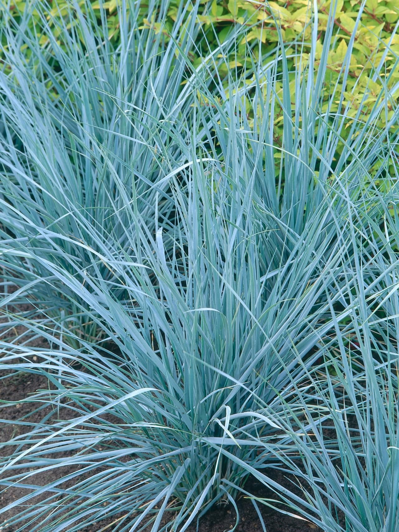 How to landscape with ornamental grasses grasses for Small landscape grasses