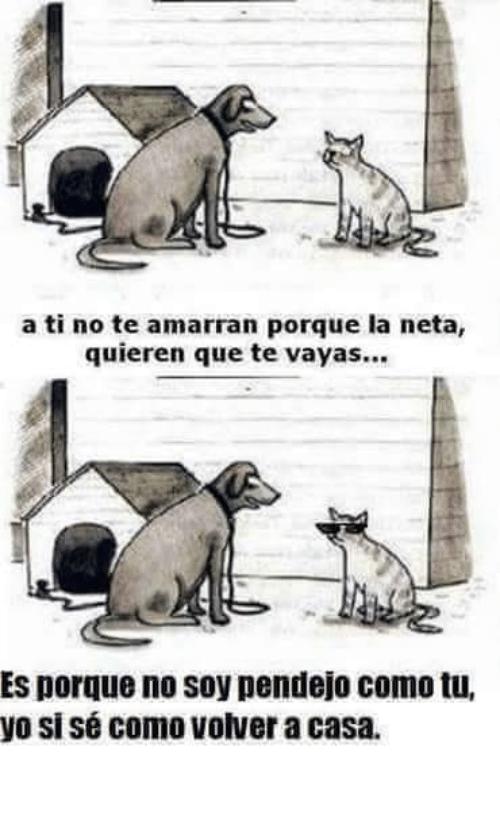 No Te Vayas Fotos De Animales Perros Meme Divertido