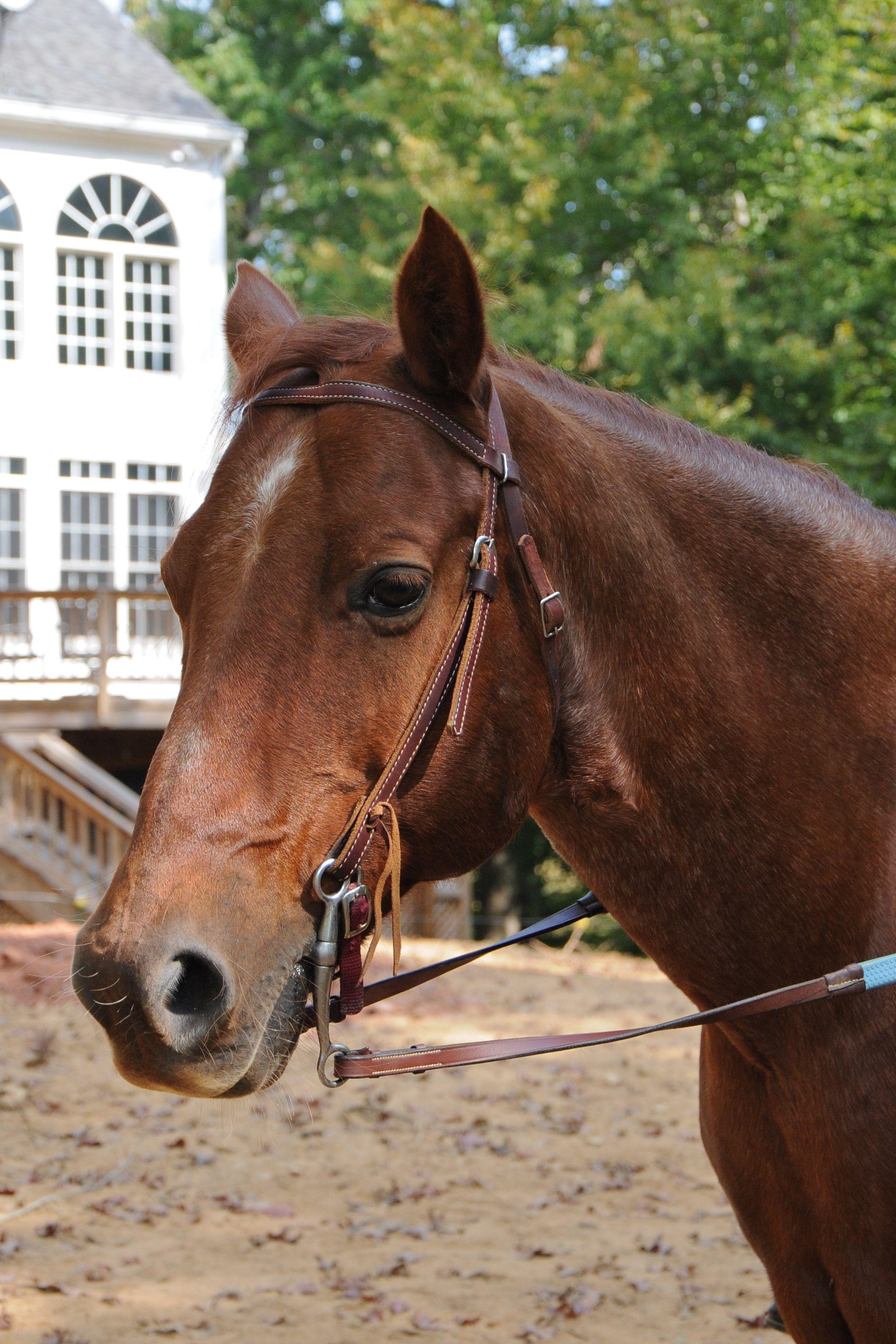 Popular Wallpaper Horse Flicka - 8bb69273d0e7b08b3ea0607c80b62e6a  Graphic_434617.jpg