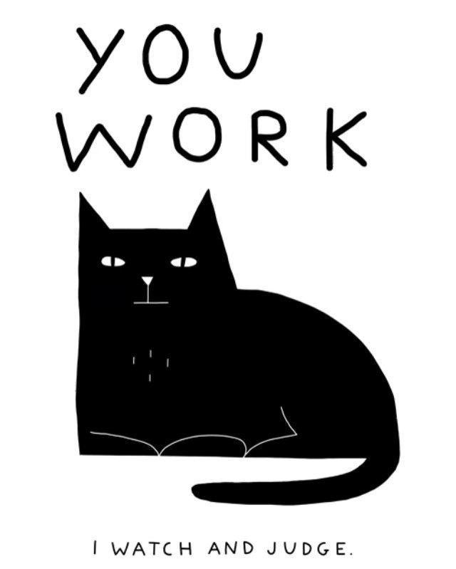 Photo of Aquí en EBENBLATT puedes encontrar las camisas de gato más divertidas y divertidas para los amantes de los gatos, ¡mira! #cats #cat #cat #cats #herrchen – kelly blog