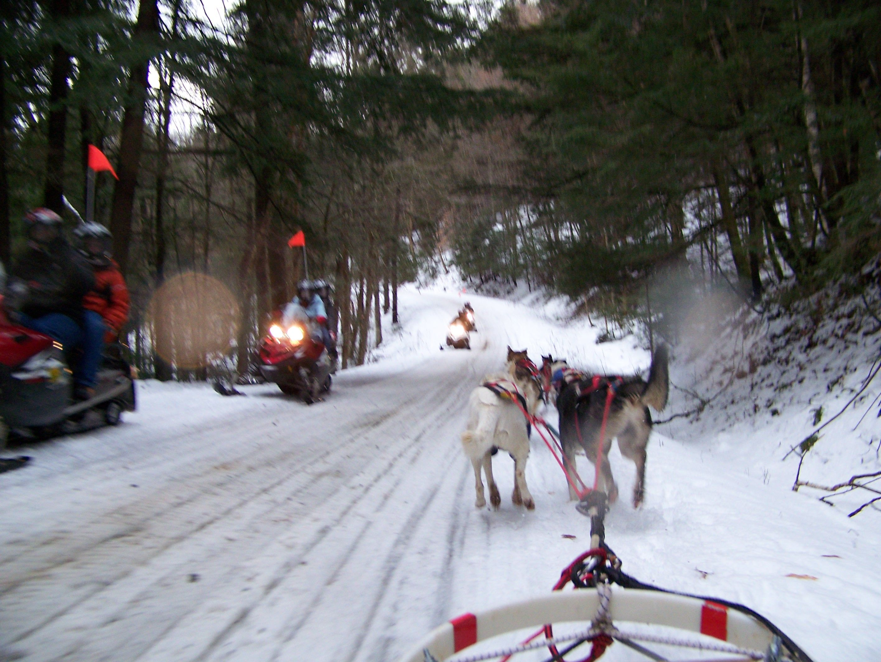 Scofflaw dawgs in stowe vt snowmobile tours dog