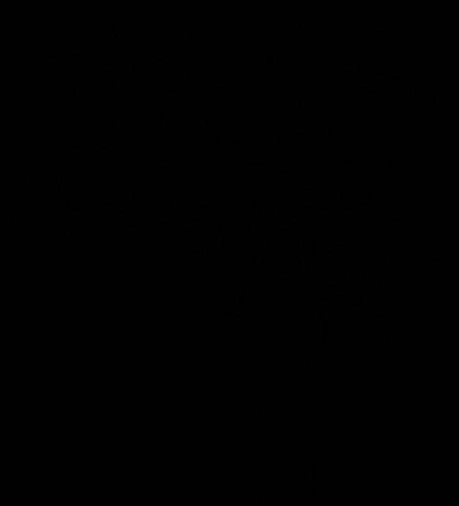 Free Image On Pixabay Tree Plant Vegetation Nature White Tree Branches Black And White Tree Black Tree