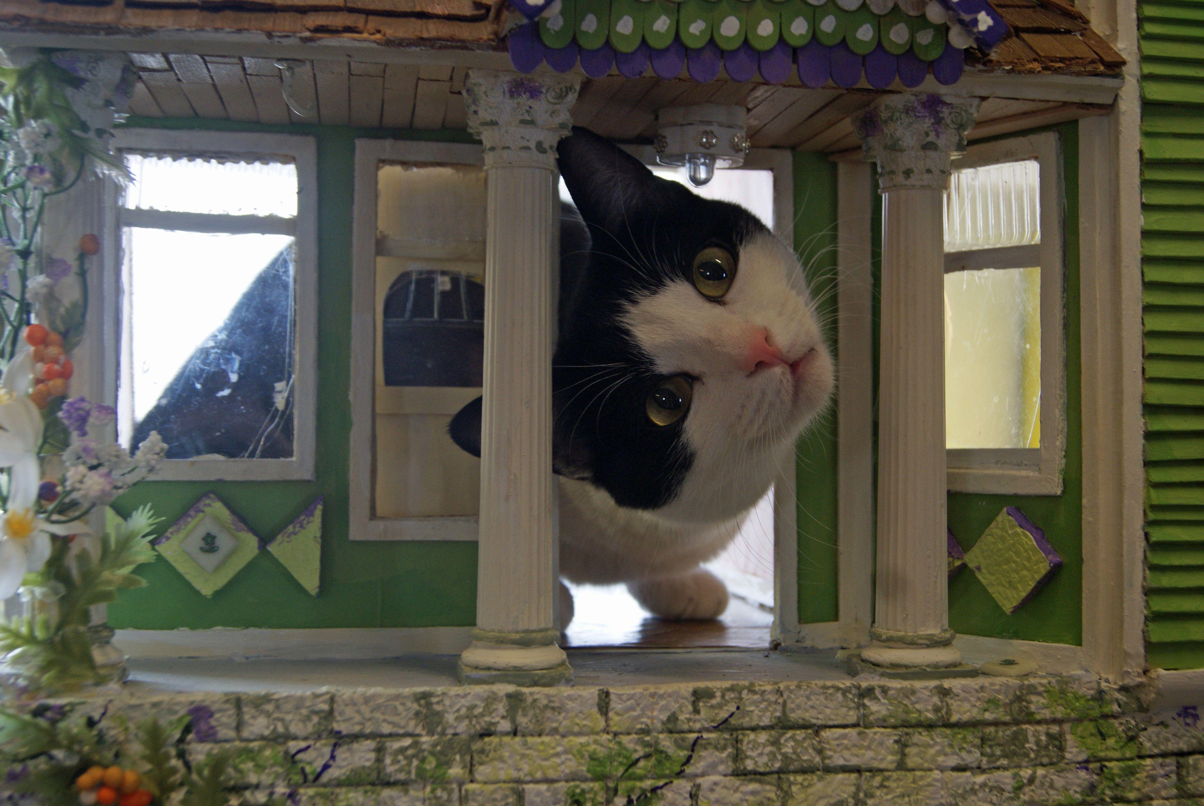 My weird Dottie Loves this dollhouse :)