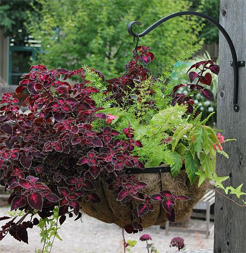 Hanging Basket Flowers Part Shade : Planter idea book container gardens pots planters