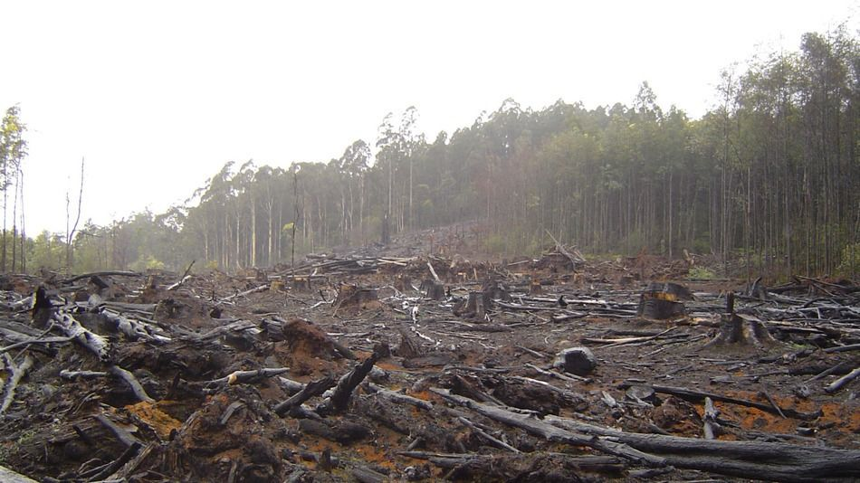 Mcdonald S Nestle Pledge To Halt Deforestation At Un Climate