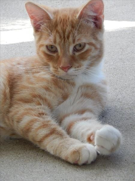 Garry the ginger kitty is looking for a loving home. He