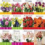 Bulb Garden Of The Month Club Garden Bulbs Indoor Flowers Flowers