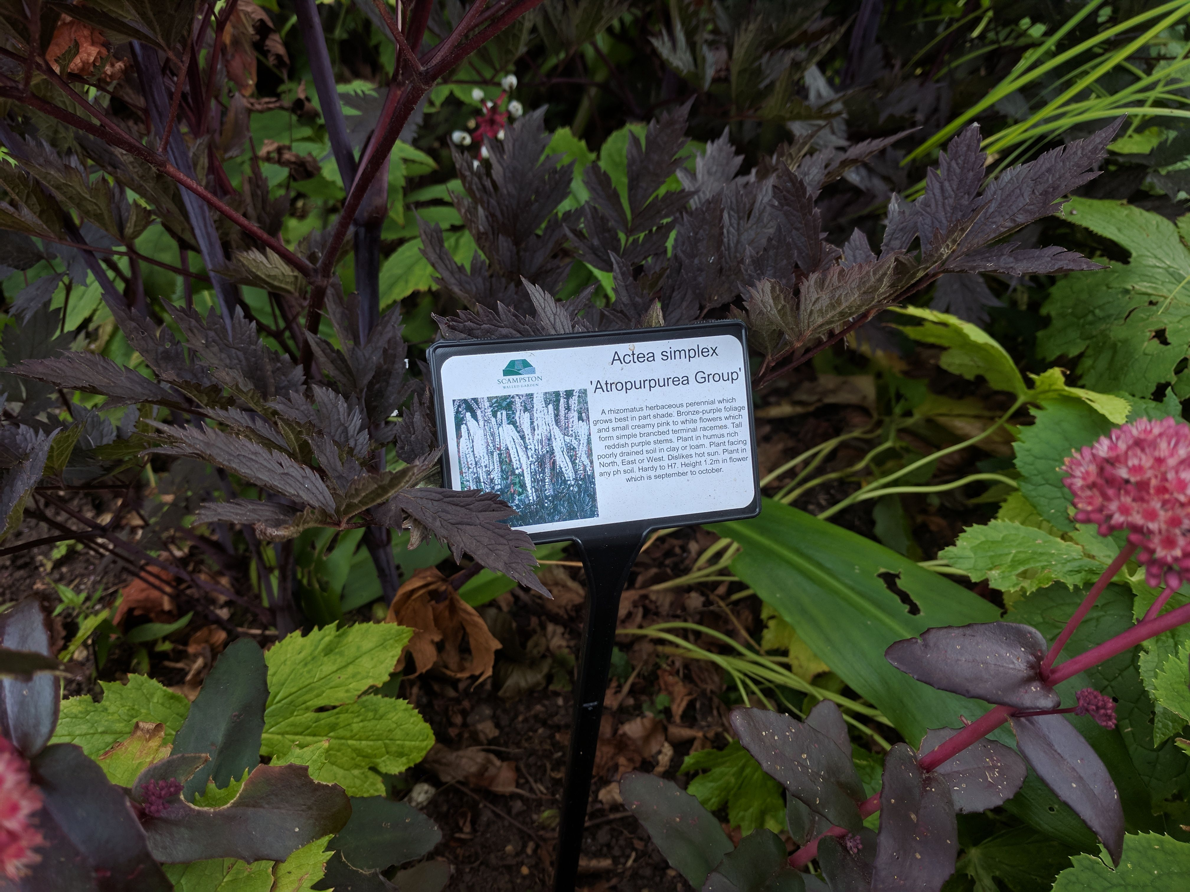 Pin by hc on plants pinterest plants