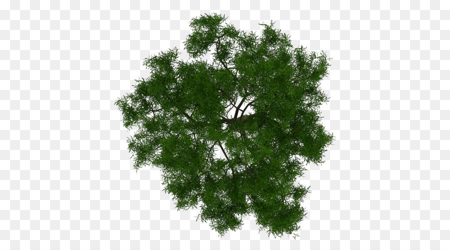 Tree Architecture Plant Project Tree Plan Png Download 700 500 Free Transparent Tree Png Download Bitki