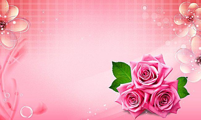 زهري تصميم الديكور زهرة الخلفية Pink Roses Background Beautiful Pink Roses Rose Background