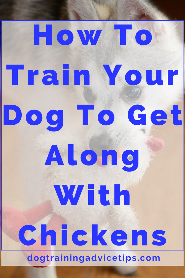 Just click the link for more dog training tips Dog ownership is really a long and complex adventure and you never know when a few of the advice youve just reviewed comes...